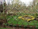 belgian-fence-300x2251